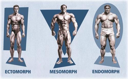 tipos físicos ectomorfo mesomorfo endomorfo