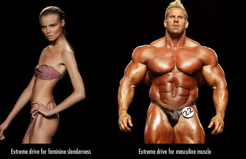 fisiculturista vs modelo anorexa